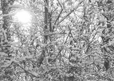 Snow December13