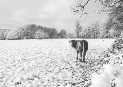 Snow December14