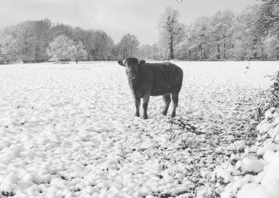 Snow December16
