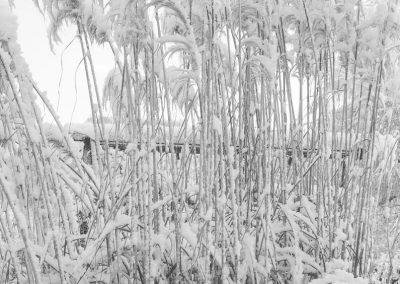 Snow December23