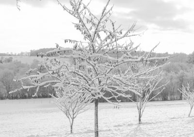 Snow December29