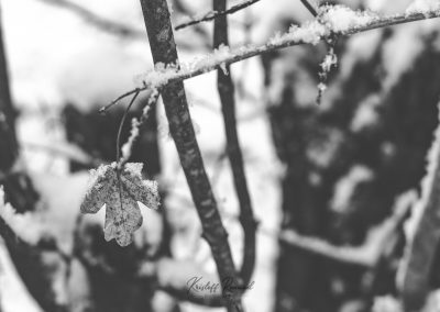Snow December34
