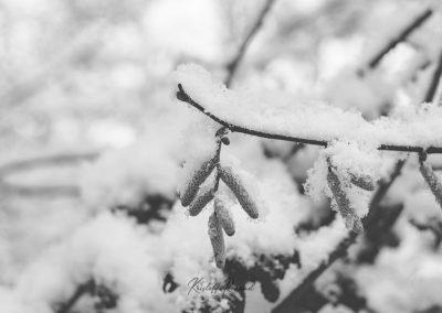 Snow December35