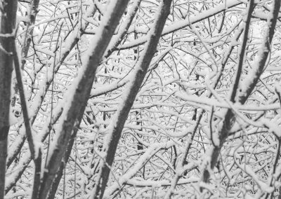 Snow December37