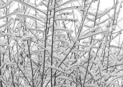 Snow December38