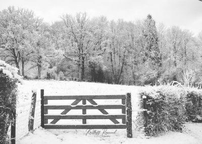 Snow December39