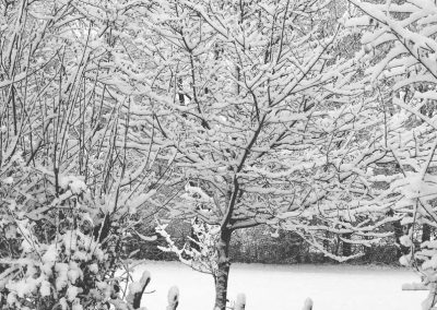 Snow December42