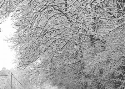Snow December46