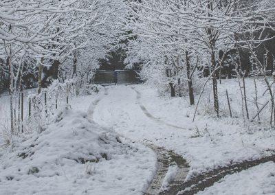 Snow December49