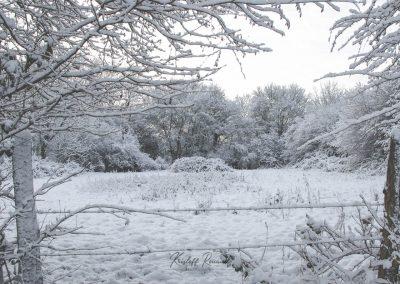 Snow December50