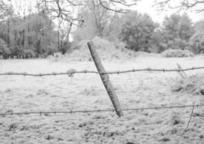 Snow December51