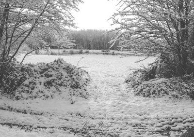Snow December64