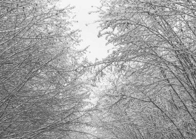 Snow December67
