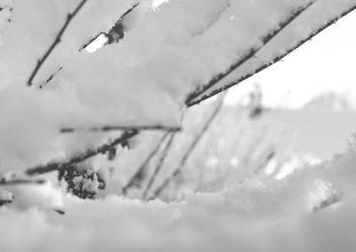 Snow December7