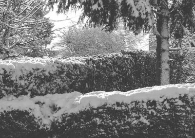 Snow December8
