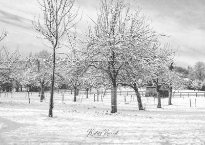 Snow December80