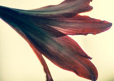 Amarilys-070320-11