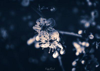 Erquy_68