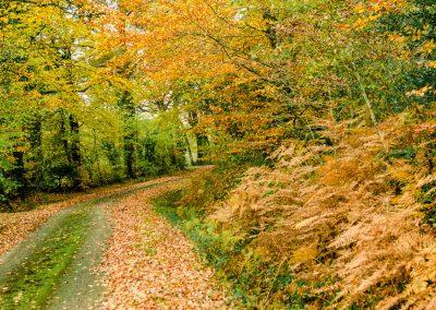 Fall Colors --221119-1