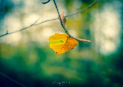 Fall Colors --221119-13