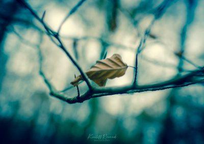 Fall Colors --221119-14