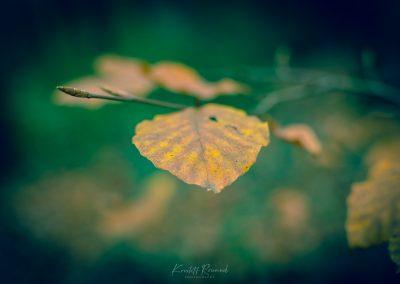 Fall Colors --221119-15