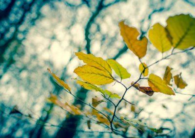 Fall Colors --221119-16
