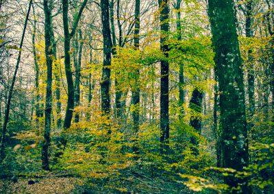 Fall Colors --221119-17