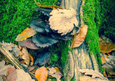 Fall Colors --221119-18