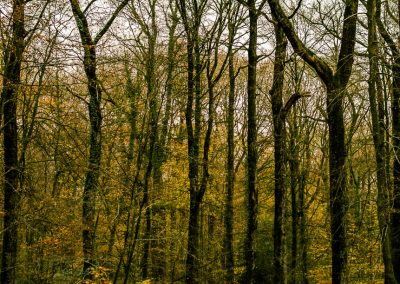 Fall Colors --221119-19