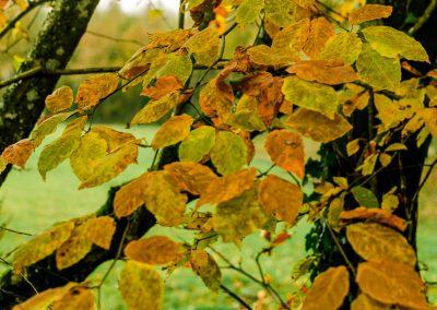 Fall Colors --221119-2