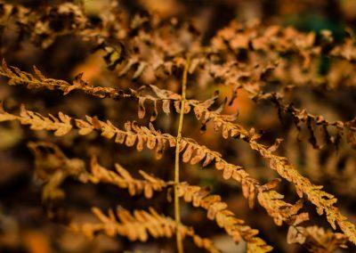 Fall Colors --221119-20