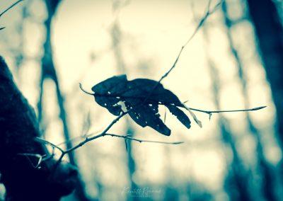 Fall Colors --221119-21