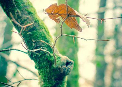 Fall Colors --221119-22