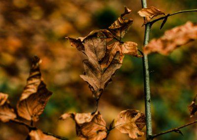 Fall Colors --221119-23
