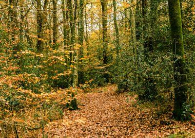 Fall Colors --221119-24