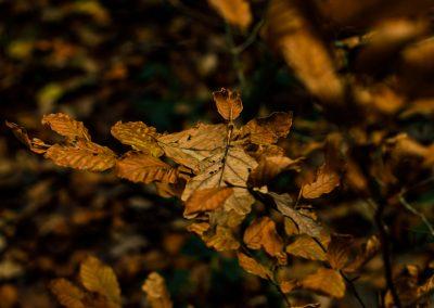 Fall Colors --221119-25