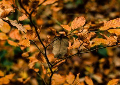 Fall Colors --221119-26