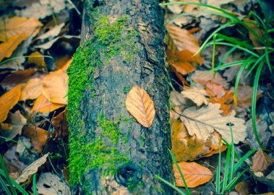 Fall Colors --221119-27