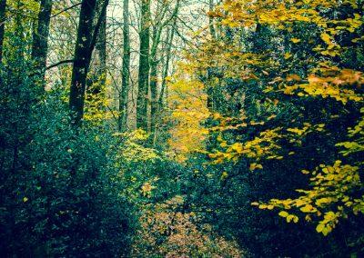 Fall Colors --221119-28