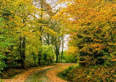 Fall Colors --221119-3