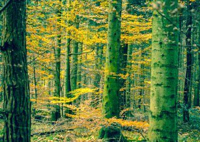 Fall Colors --221119-33