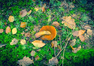 Fall Colors --221119-34