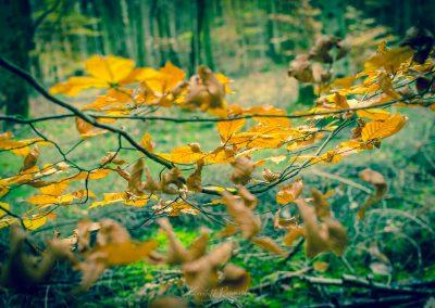 Fall Colors --221119-35
