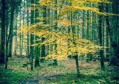 Fall Colors --221119-37