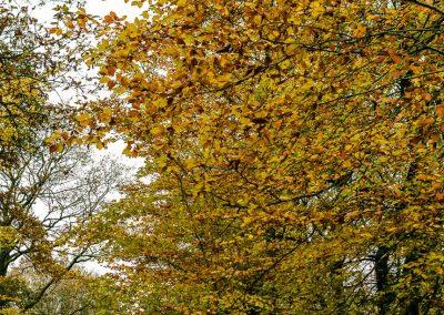 Fall Colors --221119-4