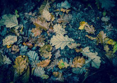 Fall Colors --221119-42