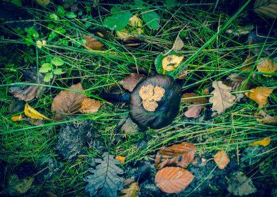 Fall Colors --221119-43
