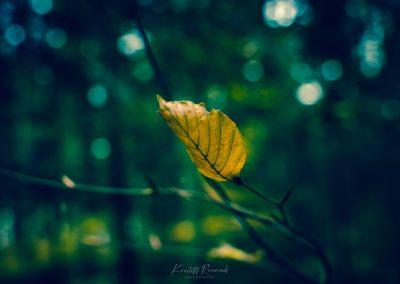 Fall Colors --221119-47