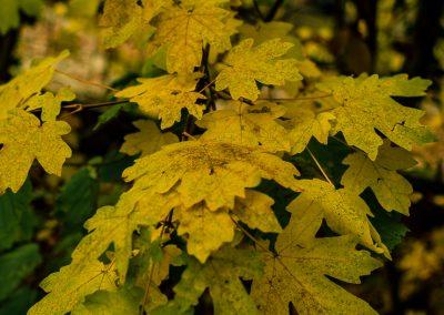 Fall Colors --221119-5